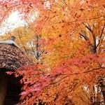 44308429 - 三分一湧水の紅葉がキレイでした