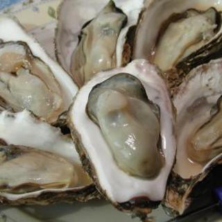 大人気の牡蠣食べ放題プラン