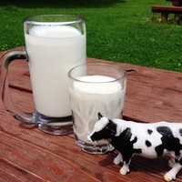 千本松牧場 - 牧場の牛さんから搾った、新鮮な牛乳
