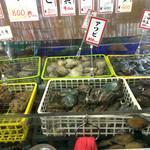 44436007 - 色んな貝があります