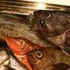 弦や - 料理写真:新鮮な魚を毎日日替わりで。