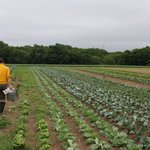 トラットリア ズッカ - 佐藤シェフ自ら畑で収穫させて貰ってます これはミニダイコンかな?