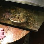 トクトク - 水槽にはデカイヒラメが…(°_°)
