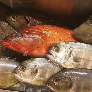 その日に仕入れた一番旬な魚をお楽しみ下さい