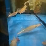 44642373 - 店内にはイカが泳いでます…♪