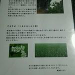 亀徳泉 -