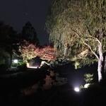 44751495 - 大仙公園 仁徳陵南側「紅葉の宴」❪2015年11月❫