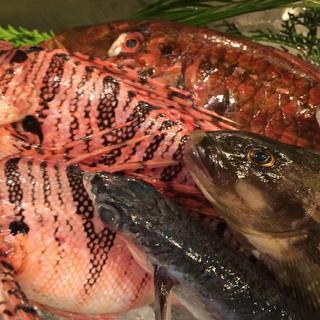 毎日、八幡浜港より鮮魚直送。