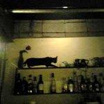 mono. - 黒ネコ。