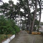 指帆亭 - 入口の松並木