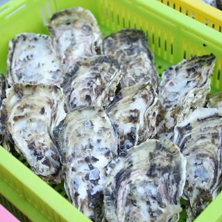 """福吉港で養殖した味わいのある""""一粒牡蠣"""""""