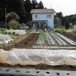 丘の家 - ランチプレートには主に丘の家ファームで採れた無農薬お野菜を使用しております。