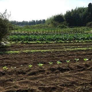 無農薬、完全自家栽培の食材