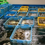 唐泊恵比須かき小屋 - 店内で牡蠣などを新鮮な状態で管理