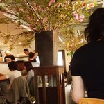 cafe ambiente - 桜がきれい★