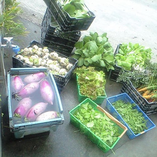 ◇◆地産地消の『旬野菜』◆◇