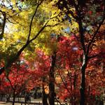 45180926 - 今年は平林寺さんの紅葉も今ひとつでした。でも、青空の中のお散歩は楽しかったです♪