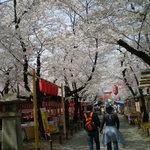 京都・平野神社境内 ひさご茶屋  -