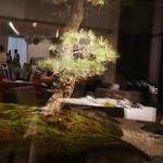 45221101 - 中庭の立派な松