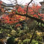 Arairyokan - 今年は暖冬で紅葉が今一とのこと