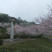 里見茶屋 - 4月頃の満開の桜と館山城