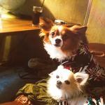 アナログ カフェ ラウンジ トーキョー - DOG WELCOME!!
