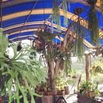 garden kuu CAFÉ - テラスには珍しいシダ植物の展示があります