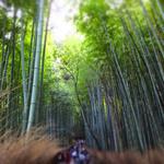戸隠 - 嵐山へお越しを