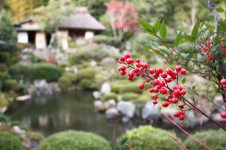 等持院 - 庭園を散策。芙蓉池と茶室・清漣亭