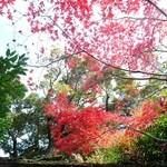 45548667 - お庭の紅葉