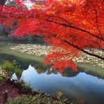 45559674 - 東山植物園の紅葉