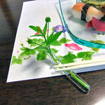湯倉温泉 鶴亀荘 - 箸置きに使われたキツネノボタン(2010年7月)