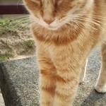 45755477 - 人懐っこい猫2