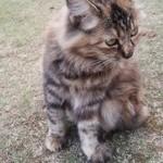 45755482 - 人懐っこい猫1