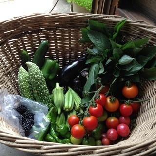 「一度食べたら忘れられない」季節の野菜をTEPPAN焼で!