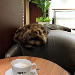 ドトールコーヒーショップ - ラッキー!ソファーを確保〜♬