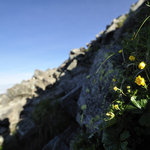 岳沢小屋 - 高嶺の花とジャンダルム