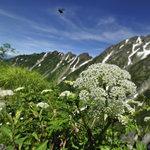 岳沢小屋 - 高嶺の花、虫付き