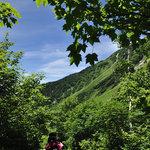 岳沢小屋 - 緑の中を進む