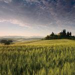 トスカネリア - 「トスカネリア」のロゴマークにもなってるトスカーナの風景