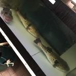 丸安 - ☆1匹4.5キロ超えの大物です☆