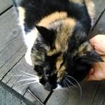 45922882 - 入口で迎えてくれた猫さん