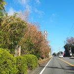 46073742 - (2015年12月)道沿いに見える「まんじゅう」の看板
