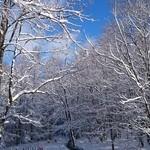 46080398 - 粉雪