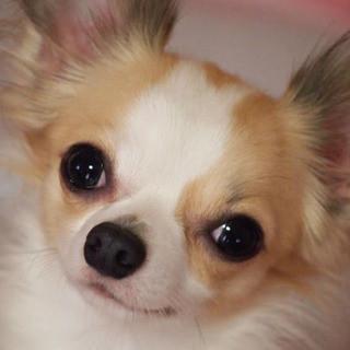 ペット同伴OK♪愛犬とランチやカフェを楽しめる