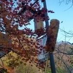 46171215 - まだ紅葉もキレイに残っていました