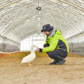 自社鴨舎で大切に育てた、こだわりのブランド鴨をご提供