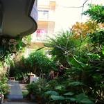 にふぇーら - ジャングルのような庭