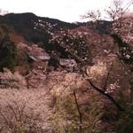 46515048 - H27/4ベランダからの桜風景