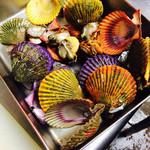 裏剣 - 島から直送‼︎カラフルな檜扇貝。